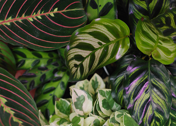 Decorative plants varying in size and color from Annie's Dependable Service Hardware in Washington D.C.